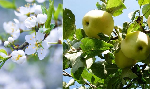 Блог - bake: Өсімдік әлеміндегі тамаша түрленулер