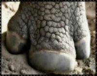 Жануартану: Туыстығы адам сенгісіз 10 жұп хайуан