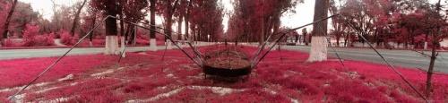 Блог - rakisheva: Фотоаулау: өрмекшіге іздеу саламыз