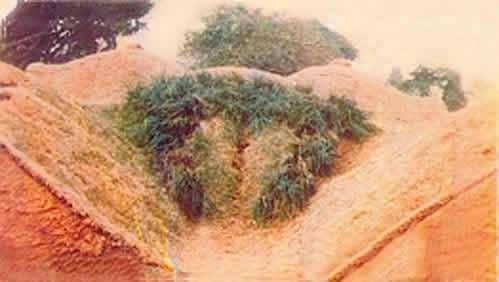 Жұма күнгі бояннндар: Табиғат ананың қалжыңдары (+18)