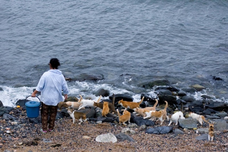 Блог - dindar: Жапония аралындағы мысықтар жұмағы