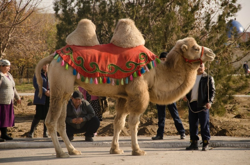 Керек тілші: Туристер келетін Түркістан