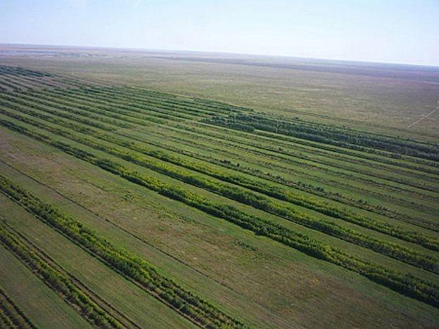 Астана жаңалықтары: Жасыл белдеу аумағында қосымша 1,5 млн астам ағаш отырғызылады